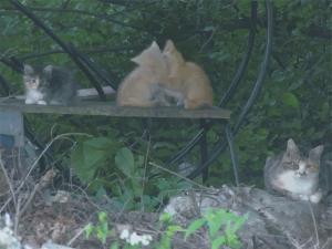 coreloutcats