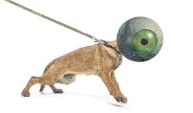 eyedog